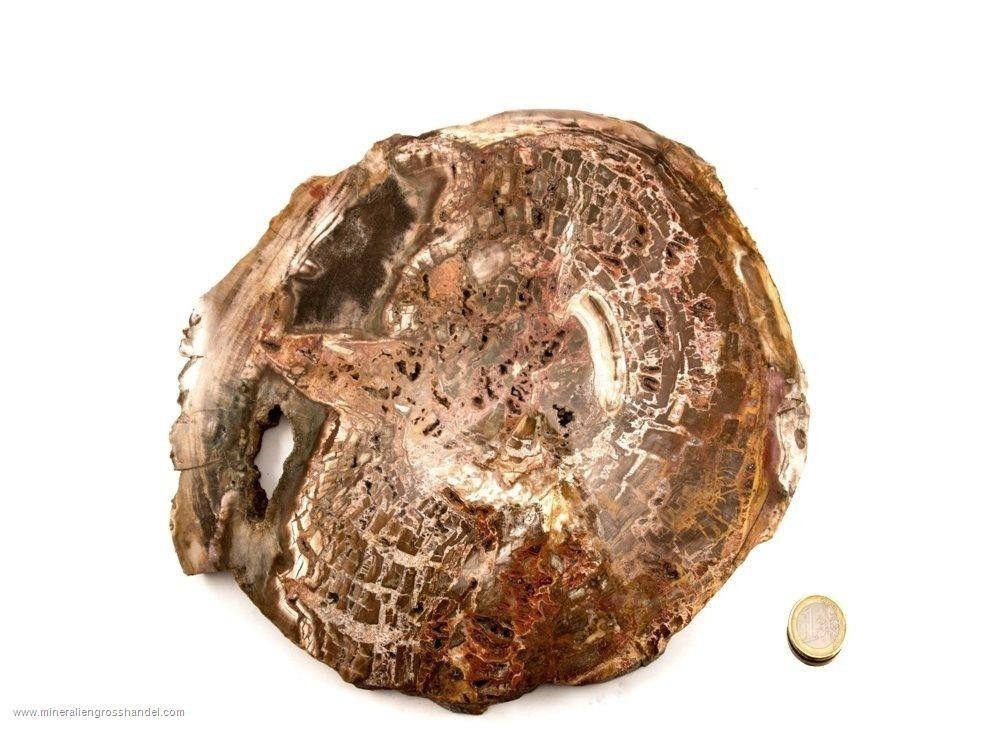 Nobile disco di legno pietrificato