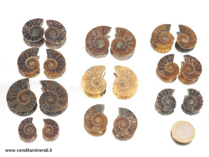 Coppia di ammoniti 'Cleoniceras' mini - 10 paia