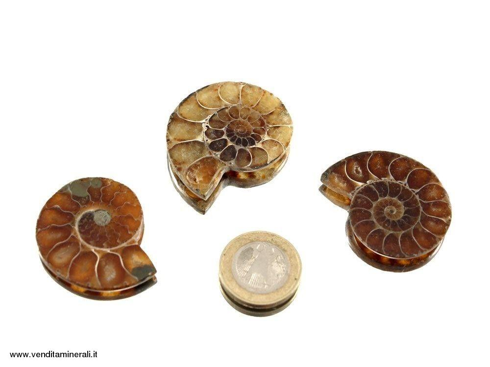 Ammonite - lucidada su entrambi i lati