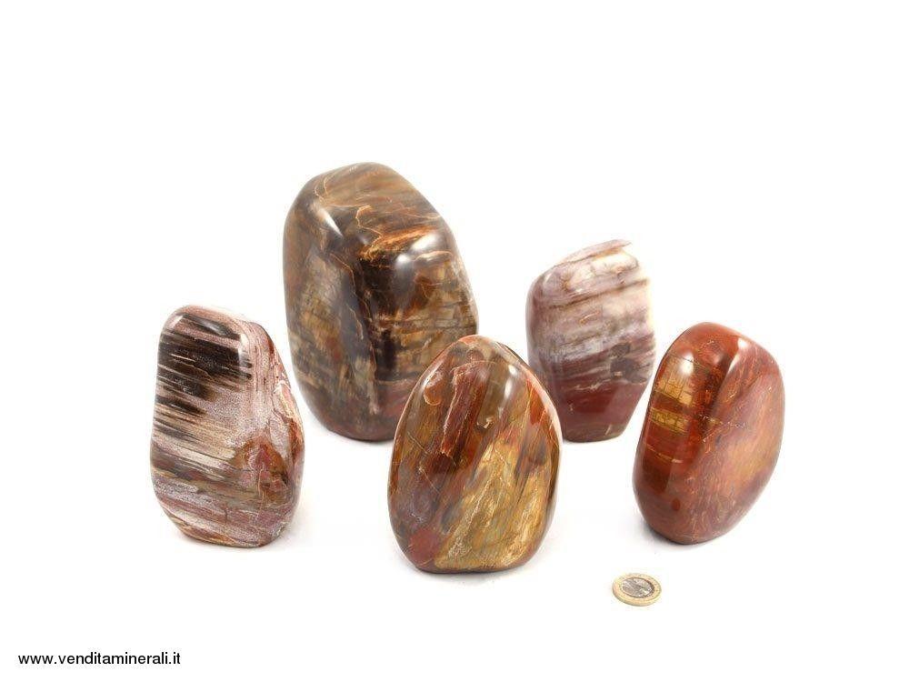 Forme di legno pietrificato a 5 kg