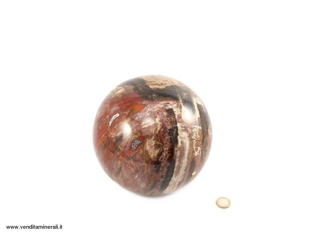 Palla di pietra fossile di legno fossile