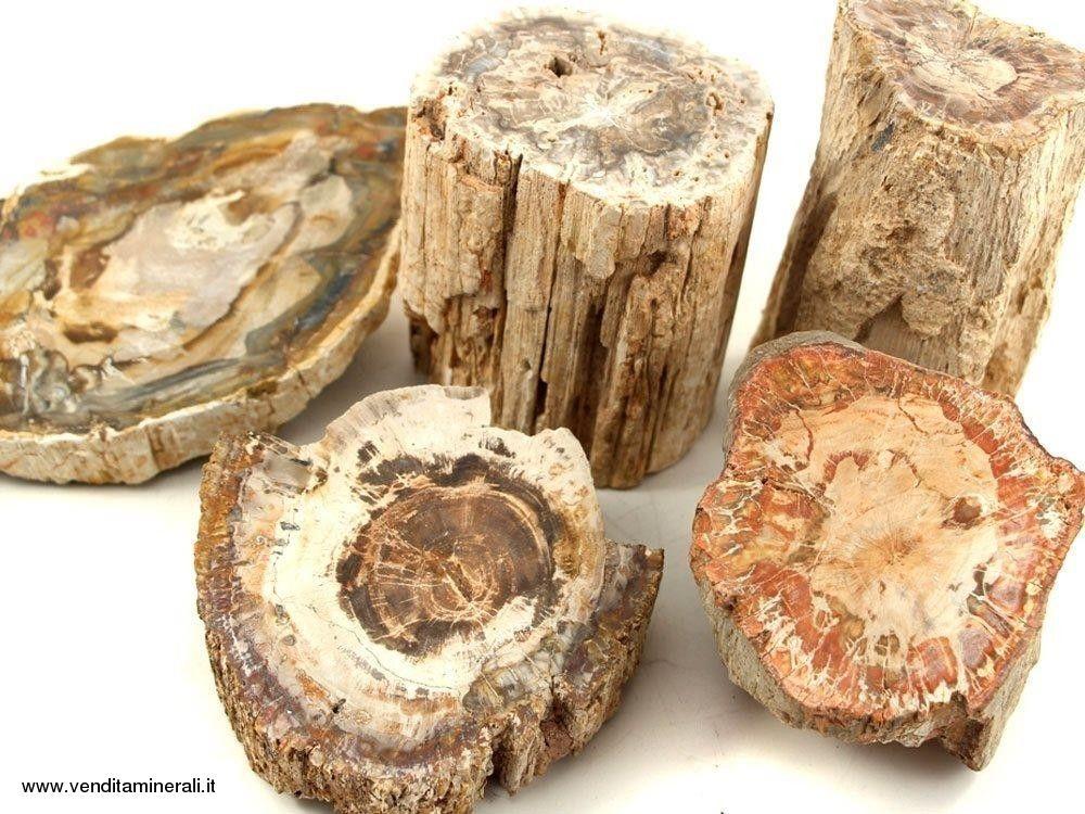 Legno pietrificato - Pietre piccole - 1 kg
