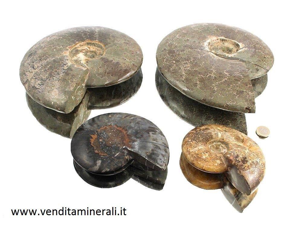 Pietre di ammoniti
